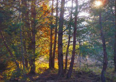 Journées Foi et Forêt